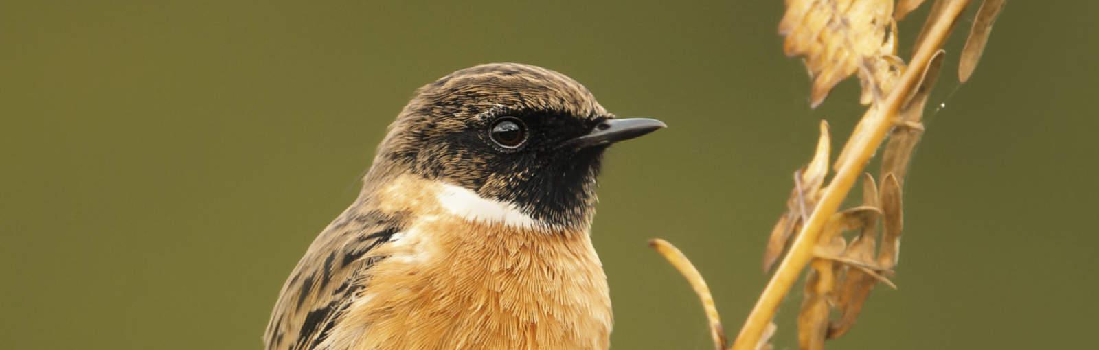 birds-chat